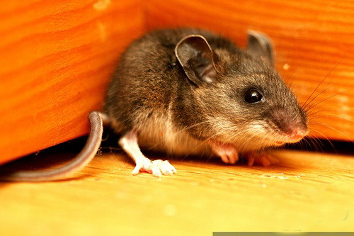 Кошки мышки.
