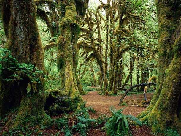 год, уничтожение леса в берендеевом царстве Бухгалтерский