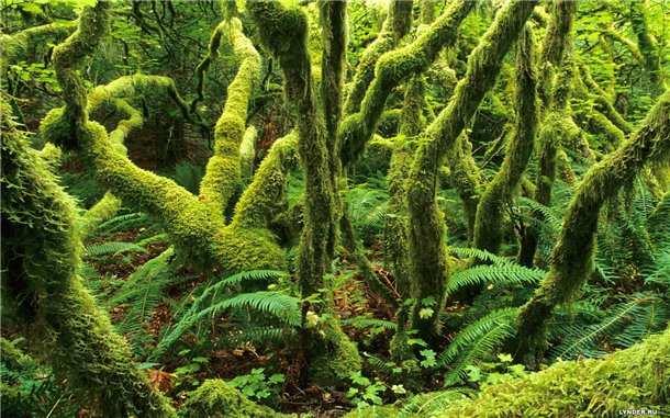 Сказочная магия леса