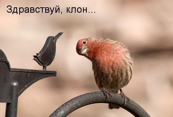 Говорящие звери...