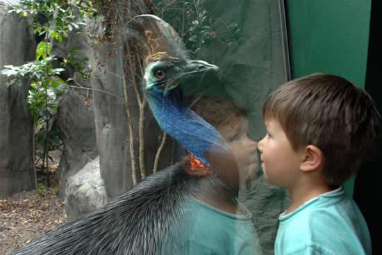 Самая опасная птица на Земле