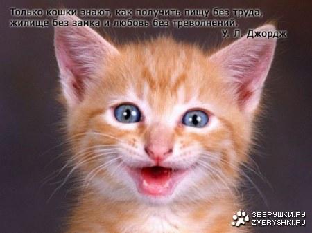 Вся правда о кошках