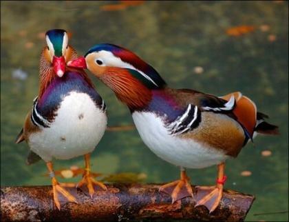 Птицы... такие разные...