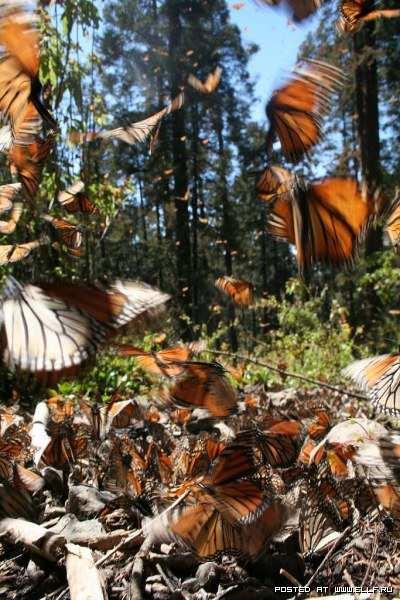 Царство бабочек