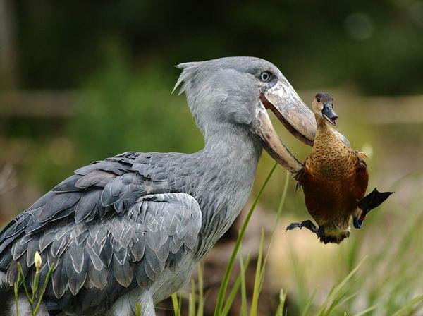 pticz