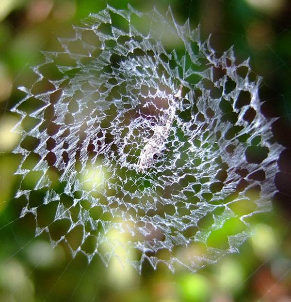 Творения природы