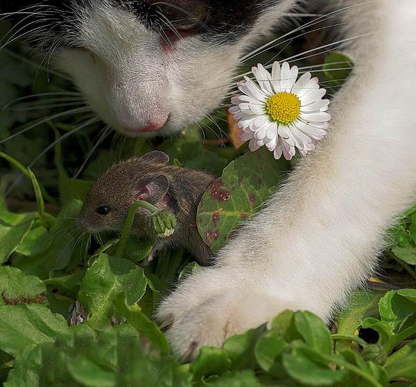 Мир животных2