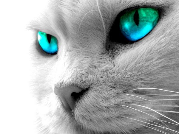 Фотки с котами красивые