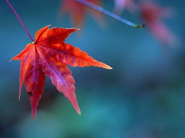 Осень ч.2