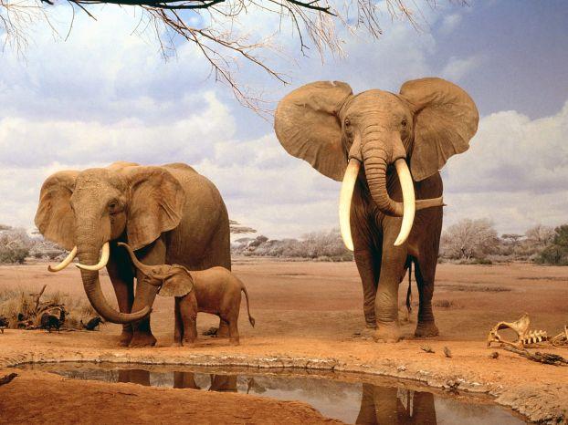 Прекрасные животные