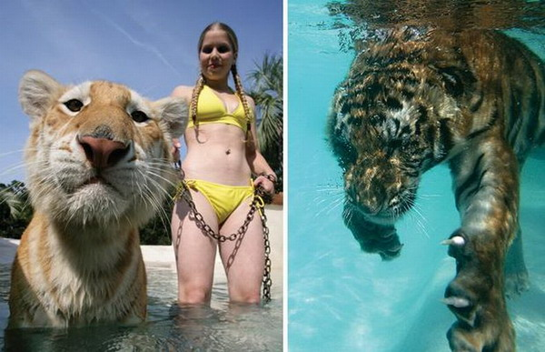 Дресировщицы с тиграми