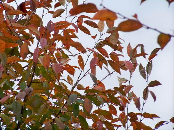Осенние проявления