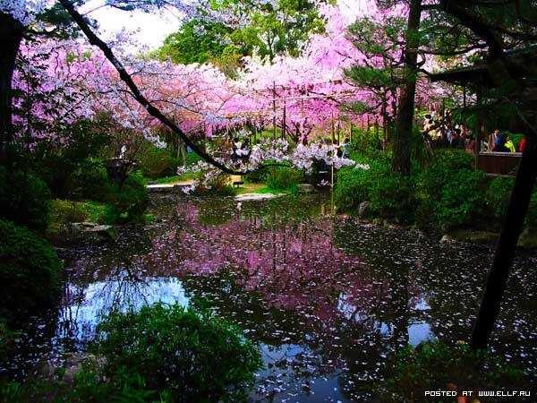Японский сад сады в японии красоты