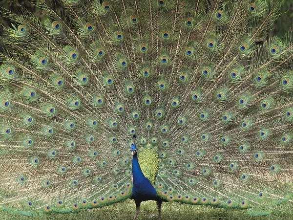 Экзотические птицы