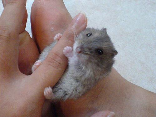 Живность на пальцах