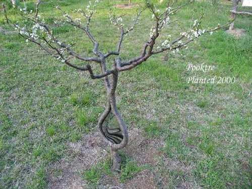 Деревья удивительной формы