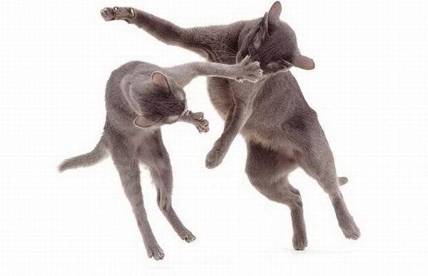 Жизнь котов