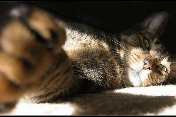 Разбуди кота!