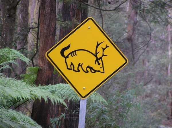 Животные приколы позитив маразмы приколы