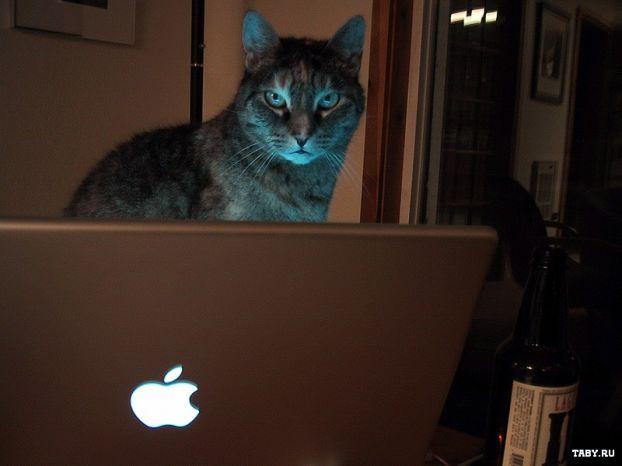 Котяки за компьютером!