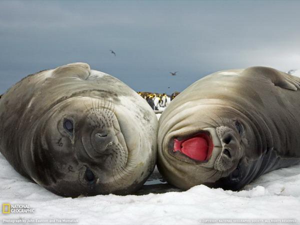 Лучшие фото от National Geographic