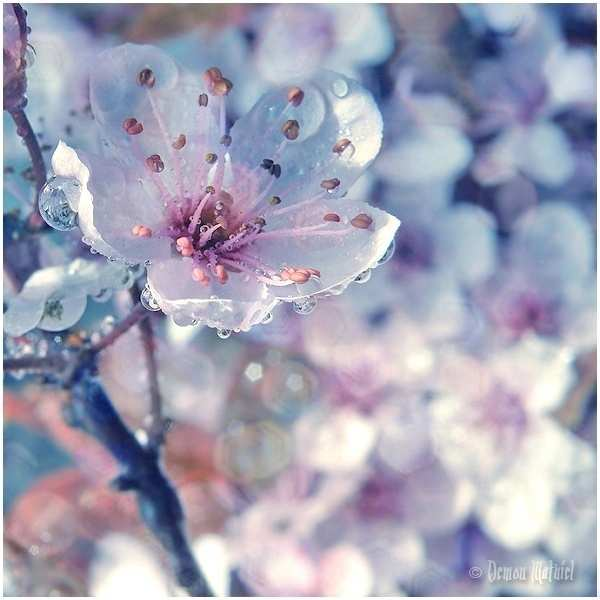 Фото цветы нежные красивые