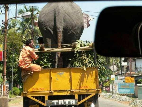 Из Индии с любовью
