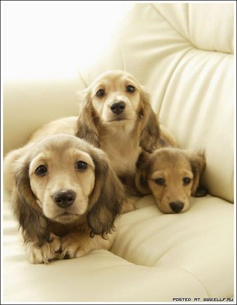 Классные щенки