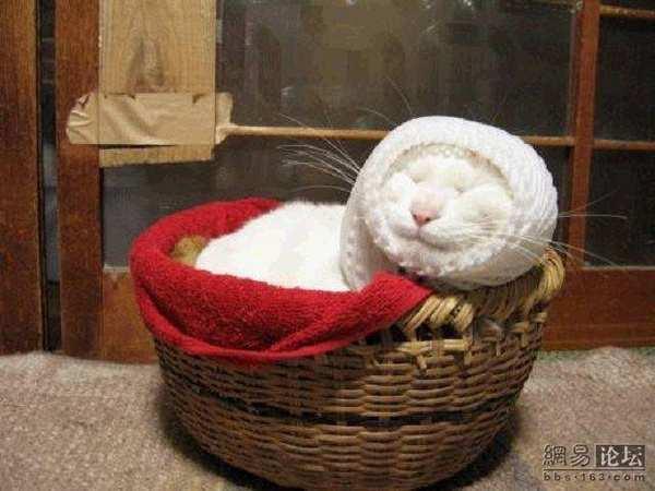 Кот, который очень любит спать