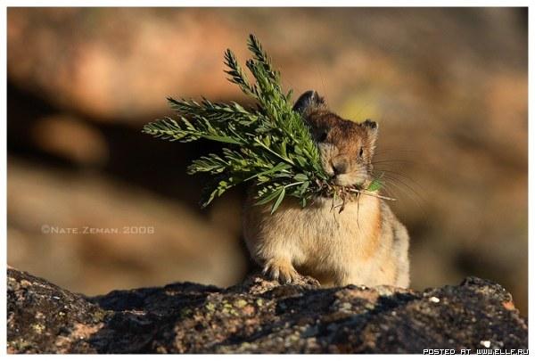 Фотографии живой природы