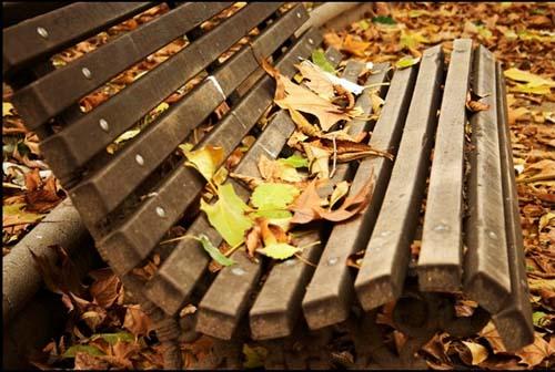 Золотая осень...