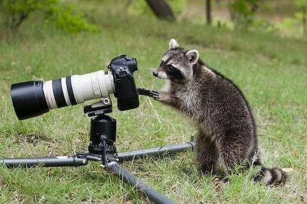 Фотографы-животные