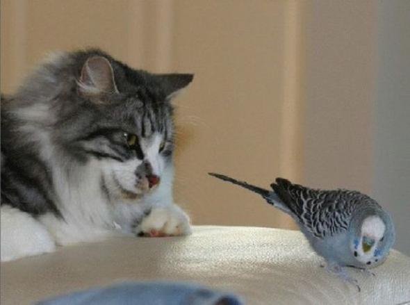 Забавный мир животных