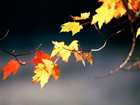 Осень Золото и багрянец