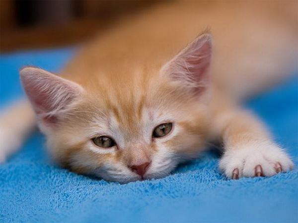 Сборище ленивых кошек