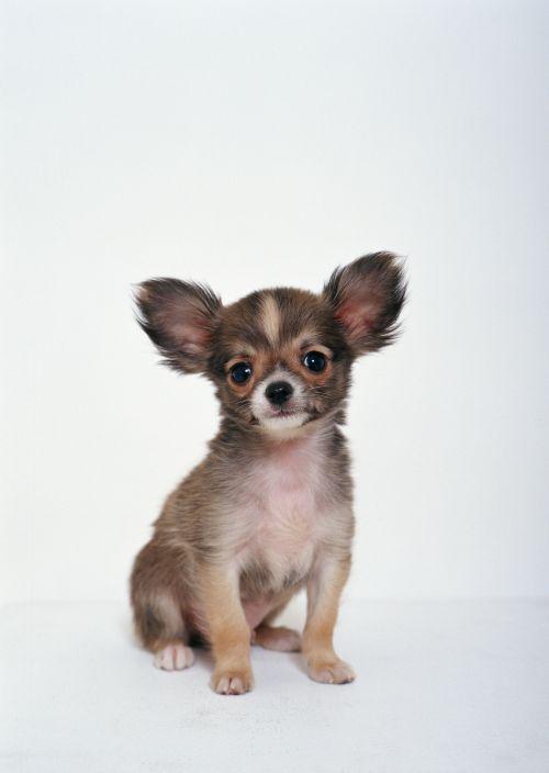 8 умильных фотографий собачек