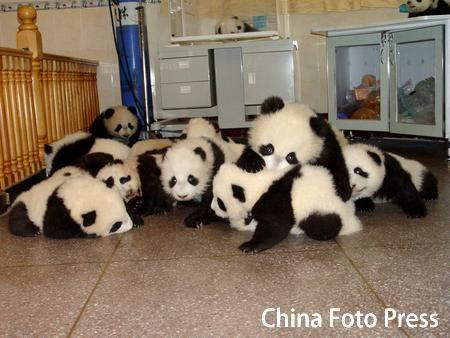 Детский садик для панд