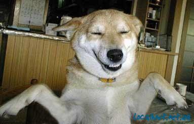 Животные тоже улыбаются