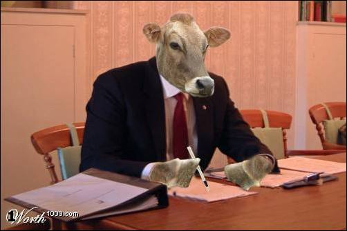 Коровы - они как мы..