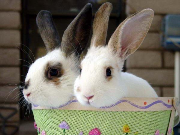 Кролики (5 фото): smaylik.ru/keyword/%CA%F0%EE%EB%E8%EA%E8