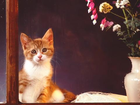 Котейки