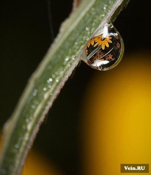 Макросъемка капель воды