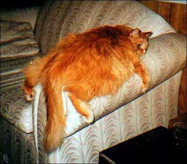 Мега коты..