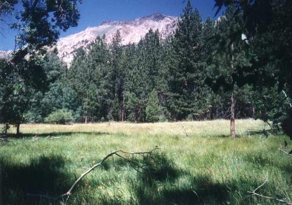 Лесные просторы