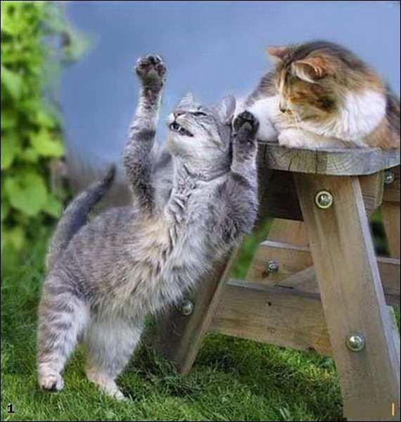 Коты торчки