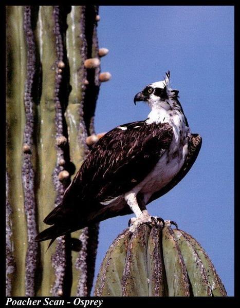 Фототграфии птиц