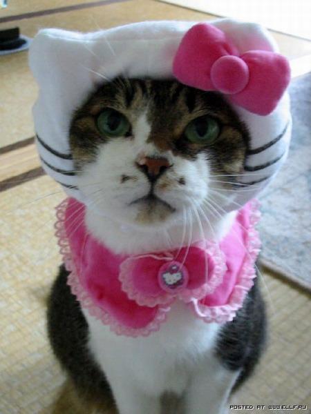 Одежка для котов