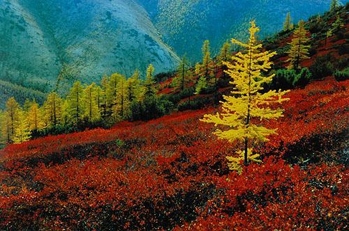 Прекрасные рисунки природы