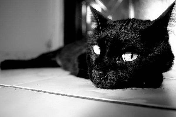 Позитивные кошки