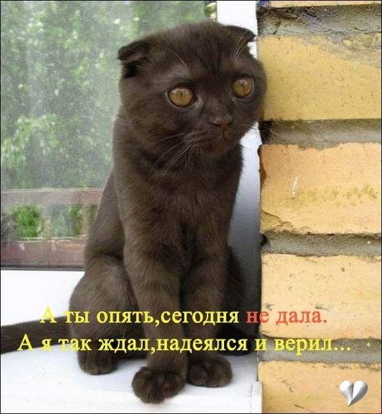 Прикольные кошки кошки коты усама